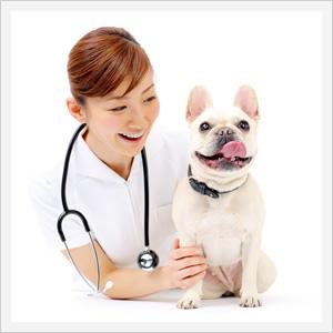 夜間/時間外・救急診療対応動物病院イメージ